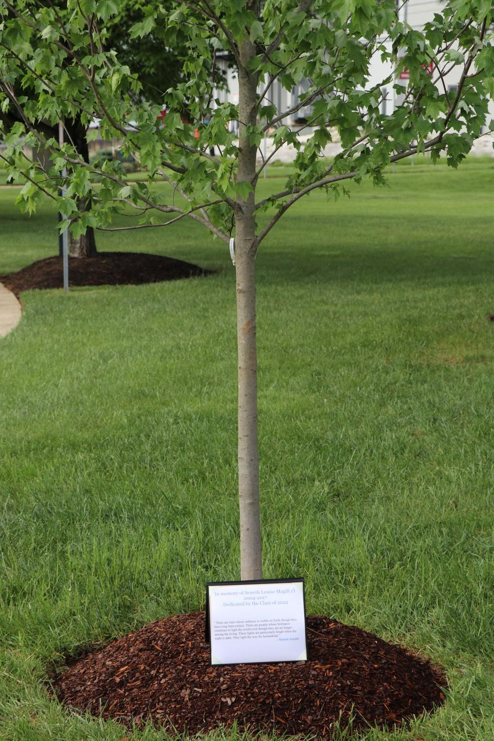 Eighth graders had a grade minyan followed by a tree dedication in honor of Senesh Magill. May 15 marks the anniversary of Magill's passing.