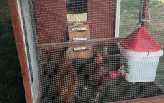 Lower School gets chicken coop