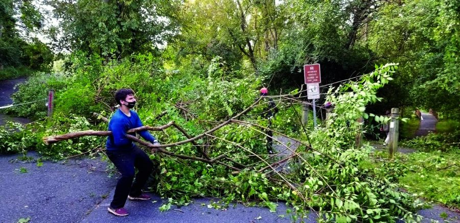 Sophomore Sam Winkler clears a fallen tree branch from a local park. As part of his community service, Winkler works with Weed Warriors, an organization that removes invasive plants from the community.