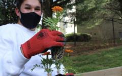 Junior Elyon Topolosky planting a flower in the garden.